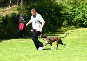 Boxer Hund vonderwaldnielerheide Ausstellung