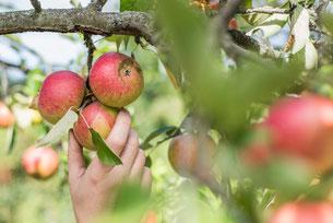 Für Natur und Mensch: Reiche Ernte auch ohne Insektizideinsatz