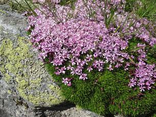 ein von der Natur zusammengestelltes Blumen-Bouquet