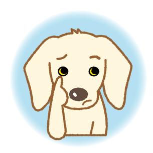 胆嚢粘液嚢腫(たんのうねんえきのうしゅ)