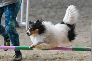 Bounty´s Best of faithful Gentledogs, Agility A3