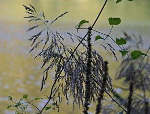 Grässer, Blätter, Wind