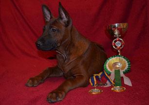 тайский_риджбек,выставка,чемпион,победитель,питомник,thairidgeback_dog,show,best_baby,winner,mani_daeng_kennel