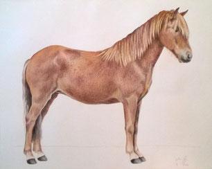 Buntstiftzeichnung auf Papier, 40 x 50 cm, 2016