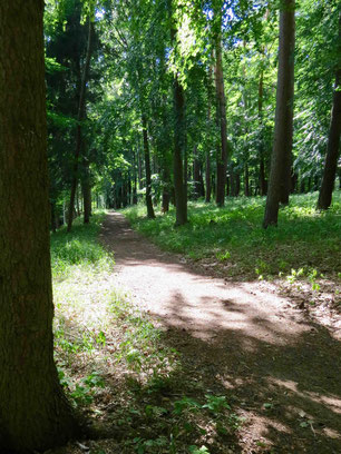Wald am Drewensee, Waldweg