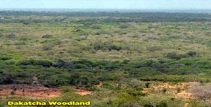 Il bosco Dakatcha. A sud, il sito è delimitato dal fiume Galana-Sabaki