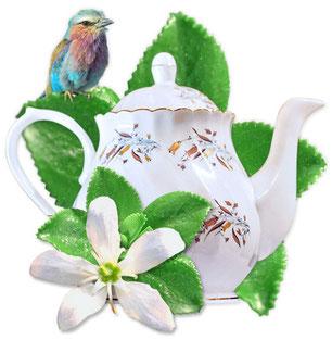 Bild Buchu-Teekanne