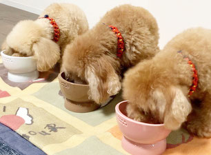 Kiruru ペット皿 パピー