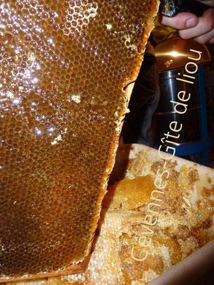 Vacances éco. Gîite de liou, extraction du miel de châtaignier