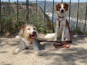 Dipsy und Chiva auf der Lorelei