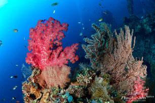 Photo ambiance plongée à Bali pour le blog