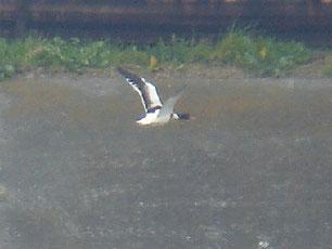 ・2007年2月17日 多摩川河口