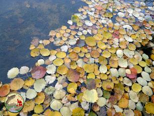 Un étang à l'automne en Corrèze