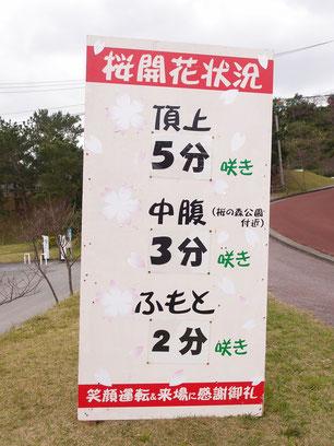 桜の開花状況 まつり当日 2020/01/18