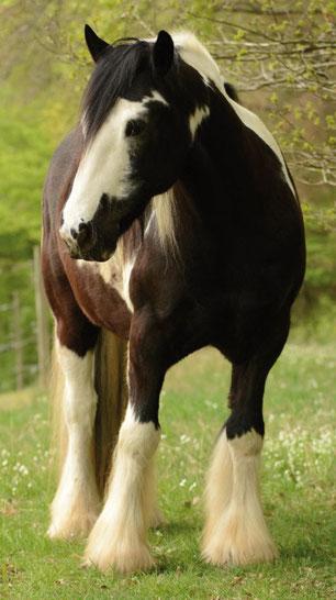 Ein Pferd mit allergischem Husten kann man gut durch Akupunktur unterdstützen.