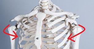肩甲骨の痛みが治った奈良県大和高田市の職員