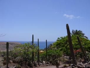 Canarische Eilanden Fuerteventura Zon Winterzon Zee Cactus