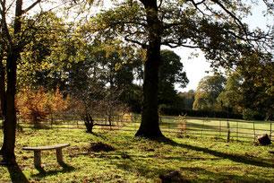 The Arboretum by Meg Quick (October, Hampton 2018 Calendar)