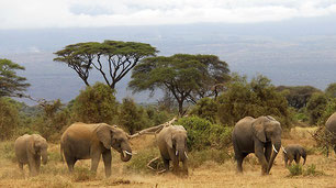Paquidermos del Parque Nacional de Amboseli, Kenia