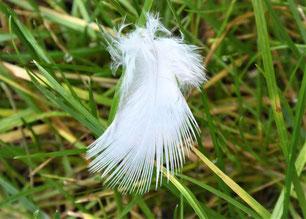 Weiße Feder in Engelform im grünen Gras