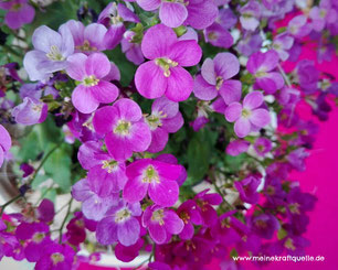 Gartenzeit, Holunderschwestern, Ausflug mit Kindern, Ofengemüse im Sommer, Kraftquelle,