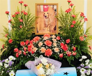 愛犬・愛猫・ペット専門の葬儀社「はなの園」火葬・引取り・代行・葬儀・供養、埼玉県越谷市
