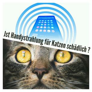 Ist Handystrahlung für Katzen schädlich?