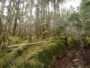 北八ヶ岳 コケの森 トレッキング ガイド
