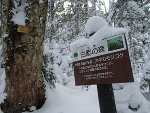 八ヶ岳 スノーシュー ガイド