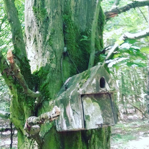 Waldbaden Böblingen
