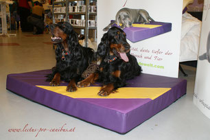 Gordon Setter Magic Ninja's