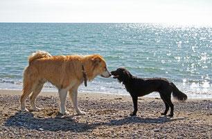 Hund richtig kennenlernen