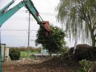樹木植栽撤去処分