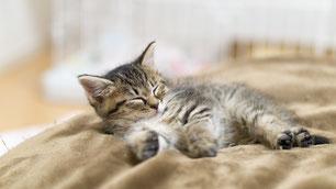 眠たそうにする猫ちゃん