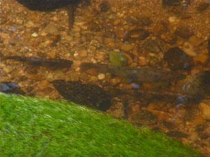 Pêche corrèze