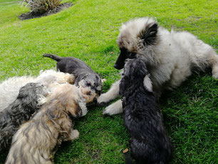Lukas der Hundekindergärtner!