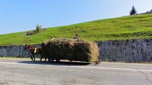 Häufig zu sehen: Pferdewagen