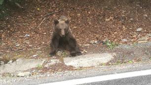 Mit Glück bekommt man einen Bären zu sehen!
