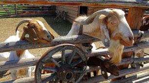 Viele Tierearten - manchmal auch hinterm Zaun