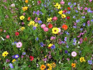Blüende Artenvielfalt auf einer Wiese