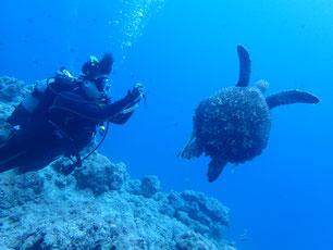 石垣島でのんびりダイビング「水中撮影初心者」ヒートハートクラブ