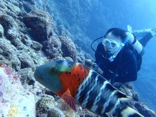 石垣島でのんびりダイビング「石垣島の海」ヒートハートクラブ