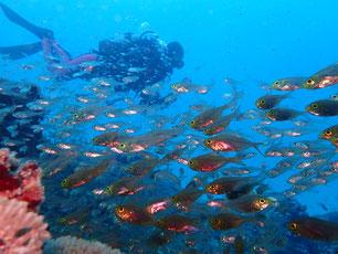 石垣島でのんびりダイビング「水中ワイド撮影」ヒートハートクラブ