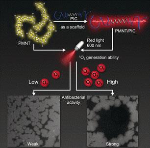 Wird das Hydrogel mit rotem Licht bestrahlt, produziert es reaktive Sauerstoffspezies. Diese töten Bakterien und Pilze ab. (Bild: Foto: Wiley-VCH)