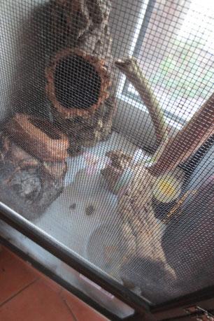 Terraium für juventilien Riesengecko