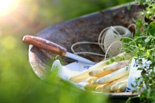 Spargel und Morchel; ein feines frisches Rezept zur Spargelzeit