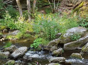 Ein rauschender Bach der über große Steine fließt