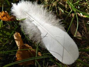 Große weiche weiße Feder auf Laub und Gras