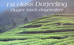 Firstflush Darjeeling Risheehat Himalaya Teekenner Teezeremonie Flugtee Lovingtea
