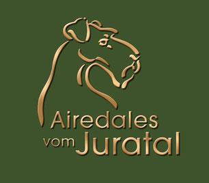 Airedale Terrier vom Juratal